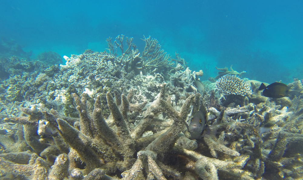 Should You Care About Coral Reef Bleaching?