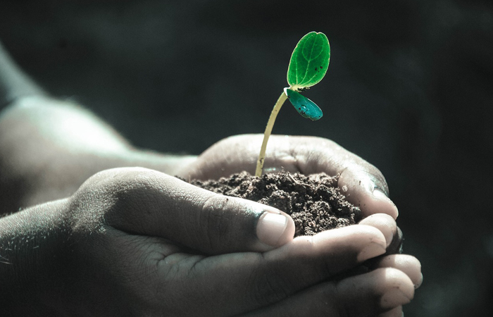 soil with plant in hand