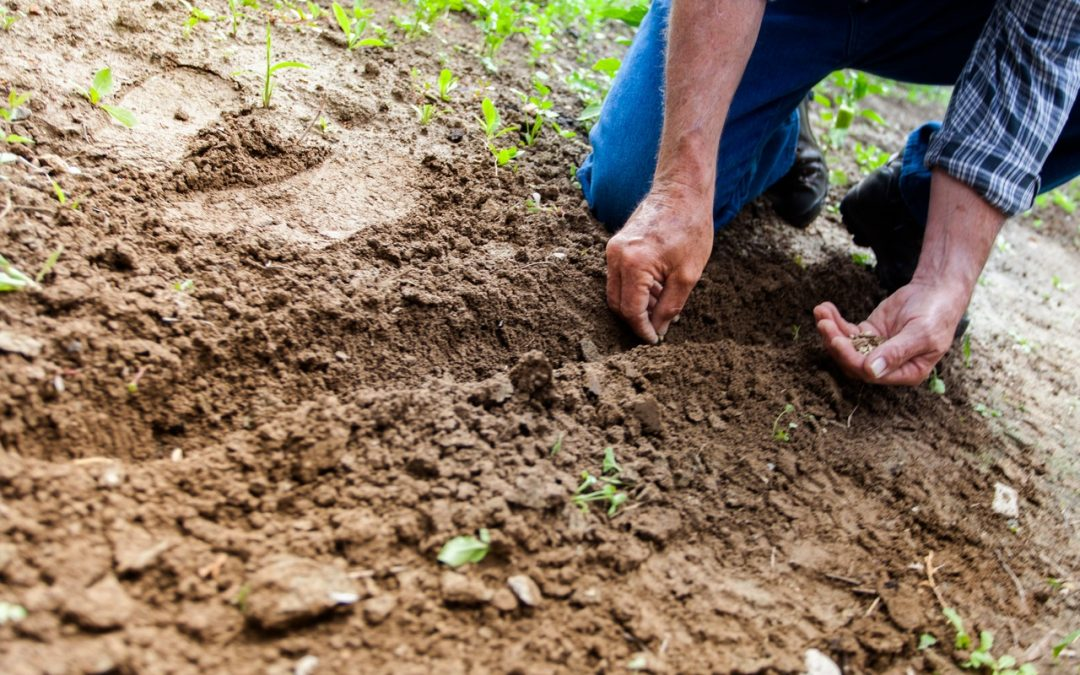 5 Tips On Maintaining Good Soil Health