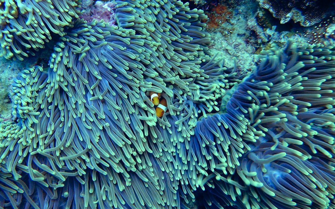 Incredible Coral Reef Facts You Need to Know