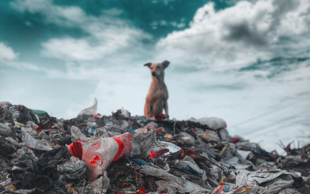 How is Plastic Packaging Affecting Our Environment?
