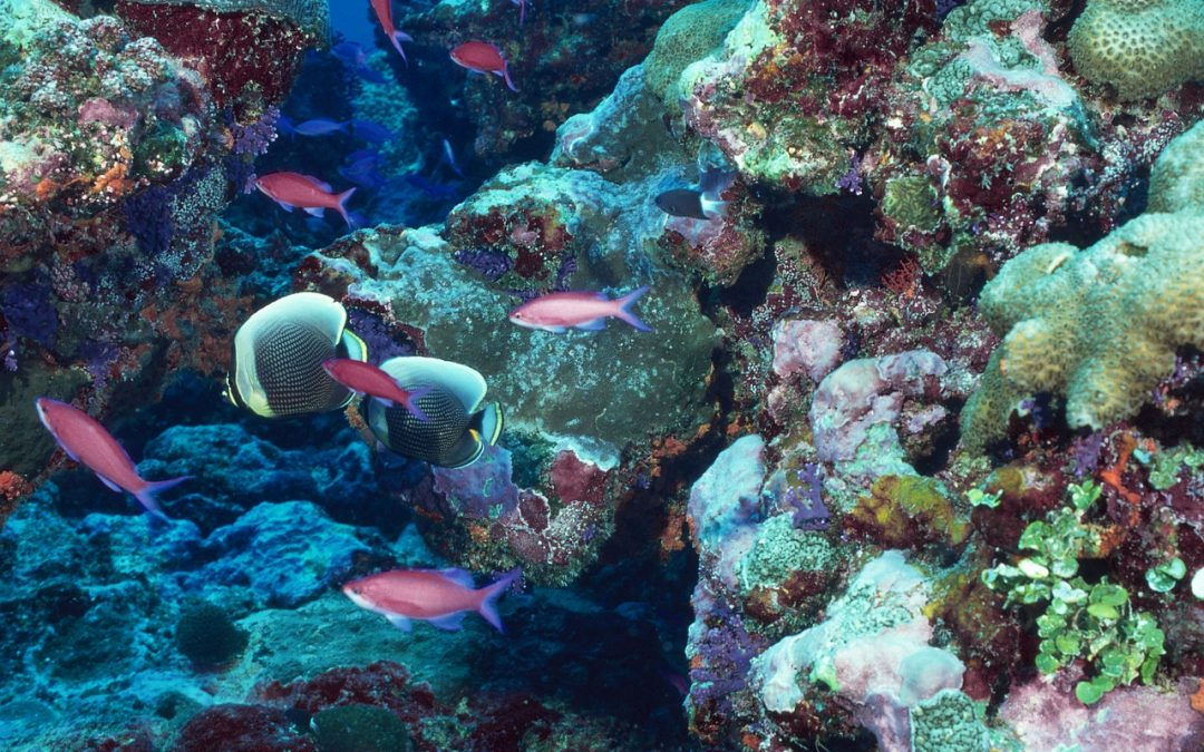 Why Are Coral Reefs Important? Here's What You Should Know